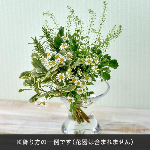 日比谷花壇【日比谷花壇】飾って楽しむ「ヴェール プレーリー」