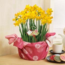 【日比谷花壇】お正月 「水仙」