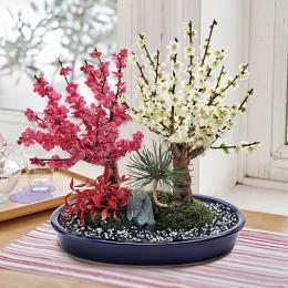 【日比谷花壇】お正月 「紅白梅盆栽」