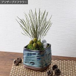 <日比谷花壇>プリザーブド観葉植物「和風ツリーファーン」