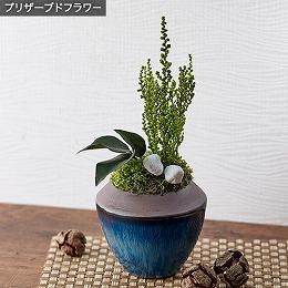 <日比谷花壇>プリザーブド観葉植物「和風ストーベ」