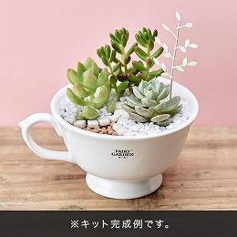 【日比谷花壇】フェアリーガーデン ミニ「フェアリーカップ ビギナーズセット(多肉植物付き)」