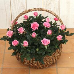 <日比谷花壇>ミニバラバスケット「パニエ ド フルール(ピンク)」