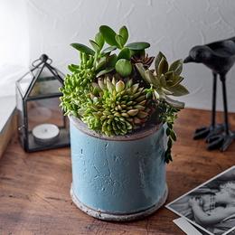 <日比谷花壇>多肉植物寄せ植え「アンティークポット・ブルー」
