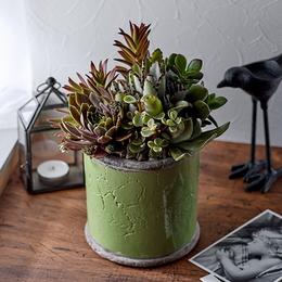 <日比谷花壇>多肉植物寄せ植え「アンティークポット・グリーン」