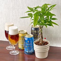 <日比谷花壇>THE軽井沢ビール(3本入)と観葉植物「パキラ」のセット