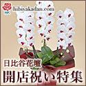 日比谷花壇 フラワーギフト 開店引越し祝い