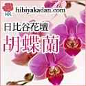 日比谷花壇_フラワーギフト_胡蝶蘭特集