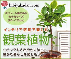 日比谷花壇_観葉植物