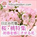 日比谷花壇 フラワーギフト 桜・桃特集